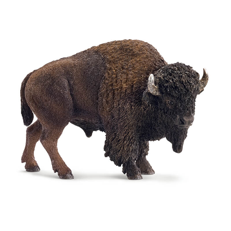 American Bison 2014