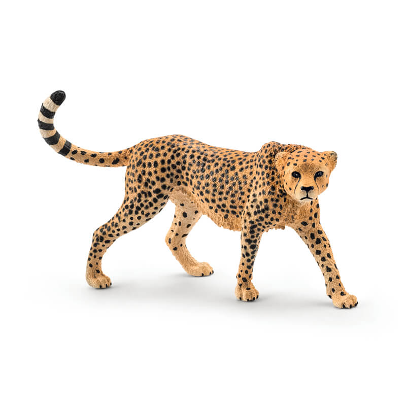 Cheetah Female 2016