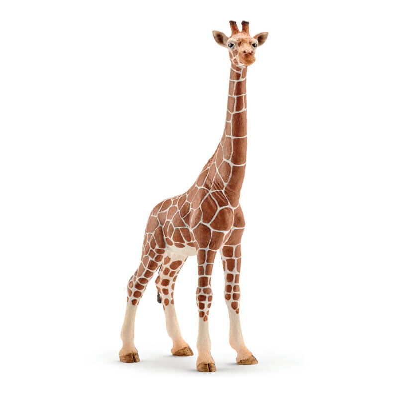 Giraffe Female 2016